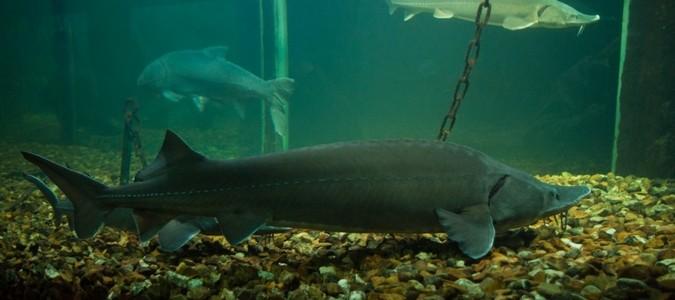 grand aquarium de touraine ancienne implantation 233 tait un ch 226 teau de la loire val de loire