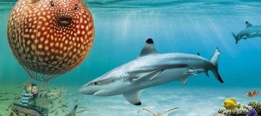 Aquarium de Touraine : Ateliers pédagogiques et Animations 2015