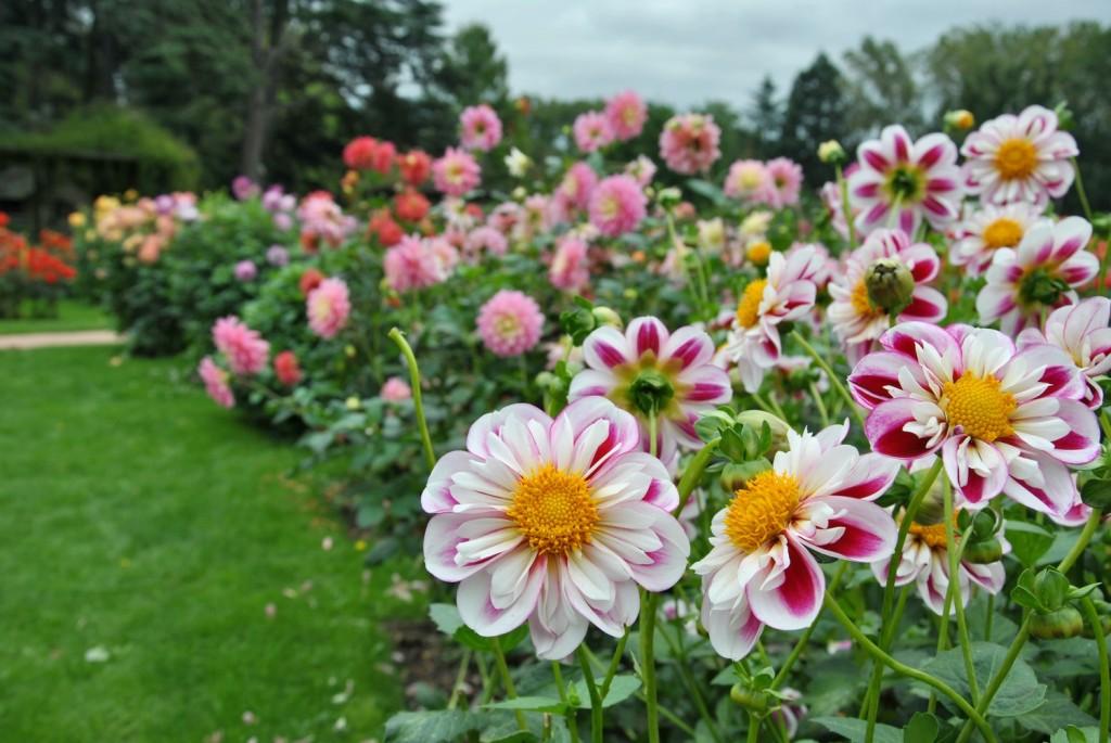 Visitez le parc floral lieu de d tente et de d couverte for Entretien jardin loiret