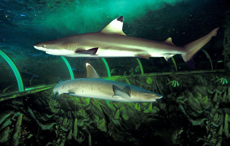 grand aquarium de touraine animations d et 233 2015 val de loire