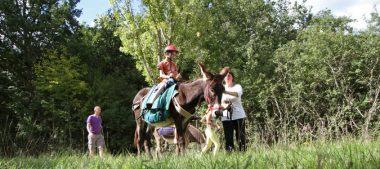 Entre la Sologne et le Val de Loire, découvrez Les Ânes de Madame !