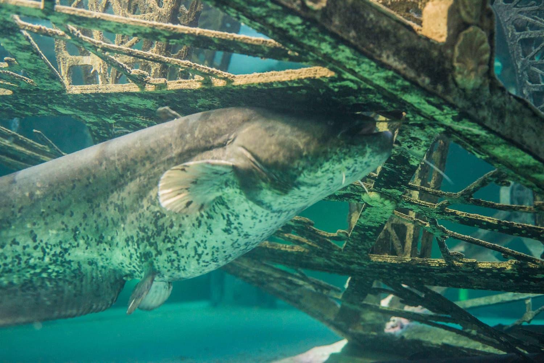 aquarium de touraine voyagez de la loire aux mers lointaines val de loire