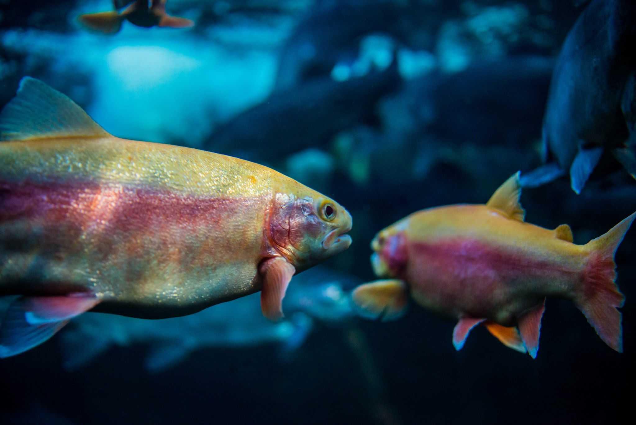 parcours sensoriel au grand aquarium de touraine val de loire