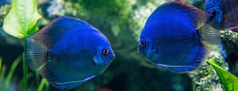 les estivales au grand aquarium de touraine val de loire