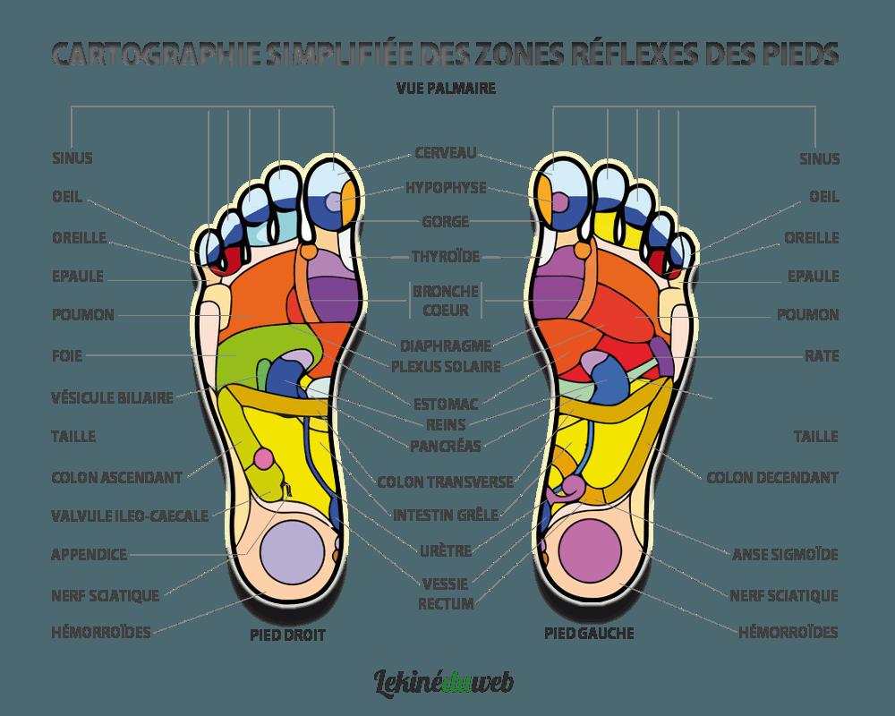 carte-reflexologie-plantaire-sentier-pieds-nus