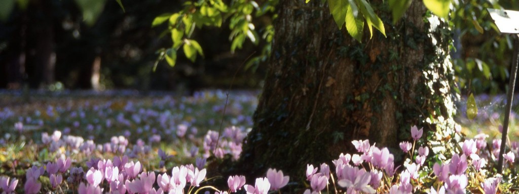 arboretum-national-des-barres-jardin-naturel