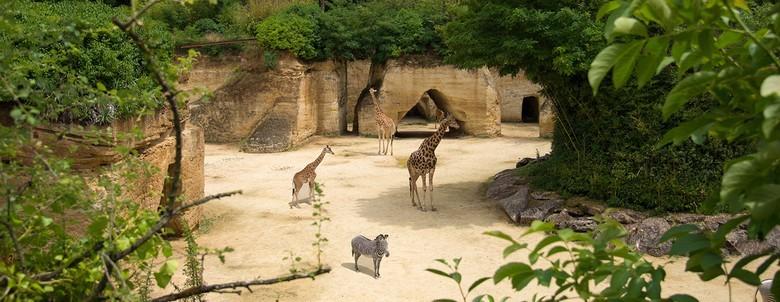 couverture-bioparc-girafes-L.Joffrion