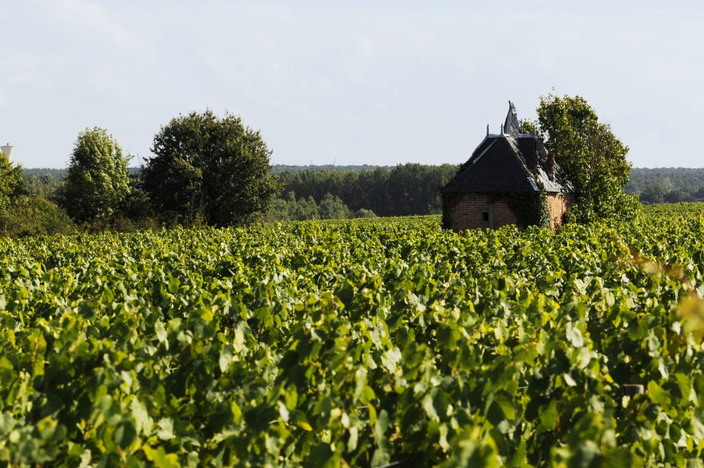 Vignoble AOC Châteaumeillant credits to bivc - My Loire Valley