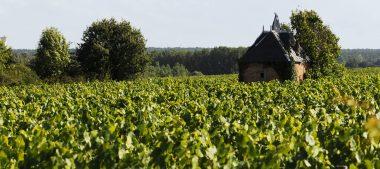 Fêtez les 10 ans de l'AOC Châteaumeillant !
