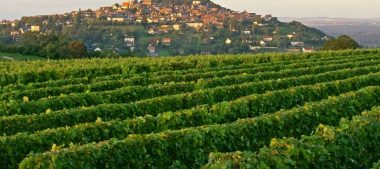 AOC sancerre, un vin de renommée mondiale
