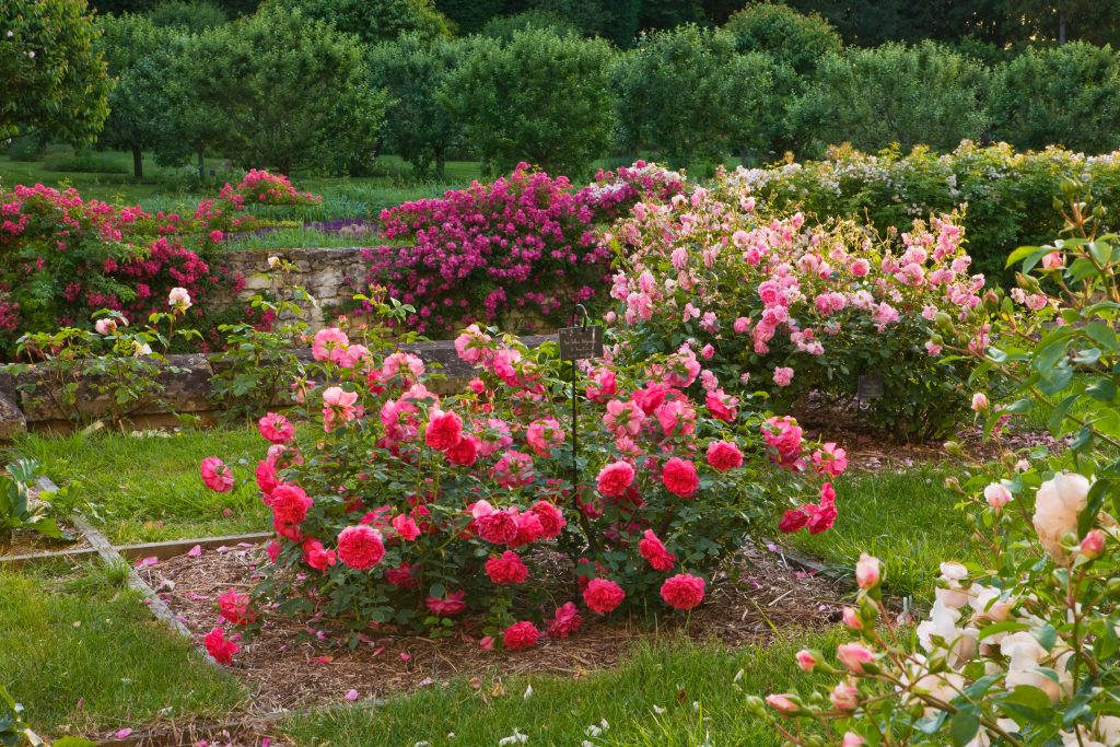 rosiers-chateau-rivau