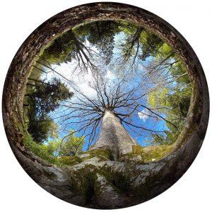 """Exposition """"Dans l'oeil d'une fourmi"""" par Thomas Dupaigne - Arboretum des Barres"""