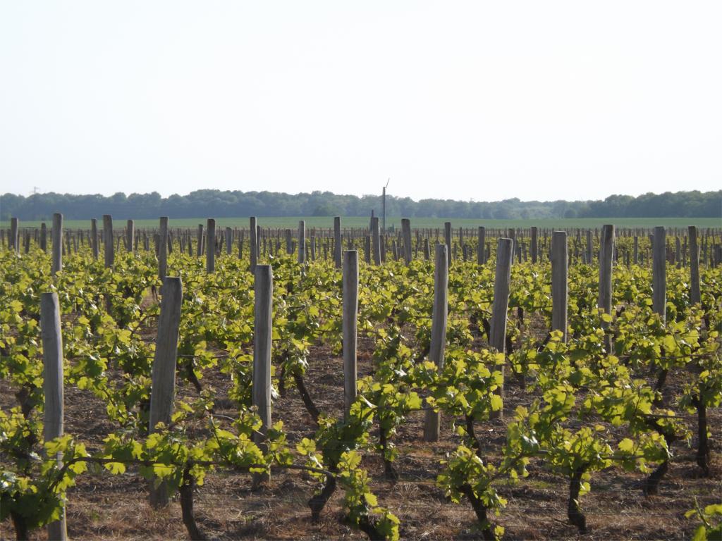 Vignoble Quincy - My Loire Valley