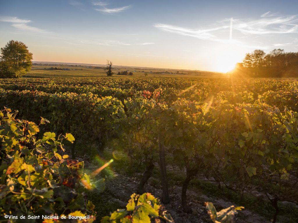 Coucher de soleil dans les vignobles - Saint Nicolas de Bourgueil