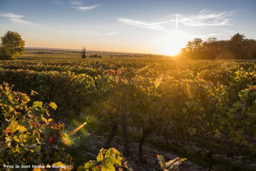 Coucher de soleil sur les vignes - AOC Saint-Nicolas-de-Bourgueil