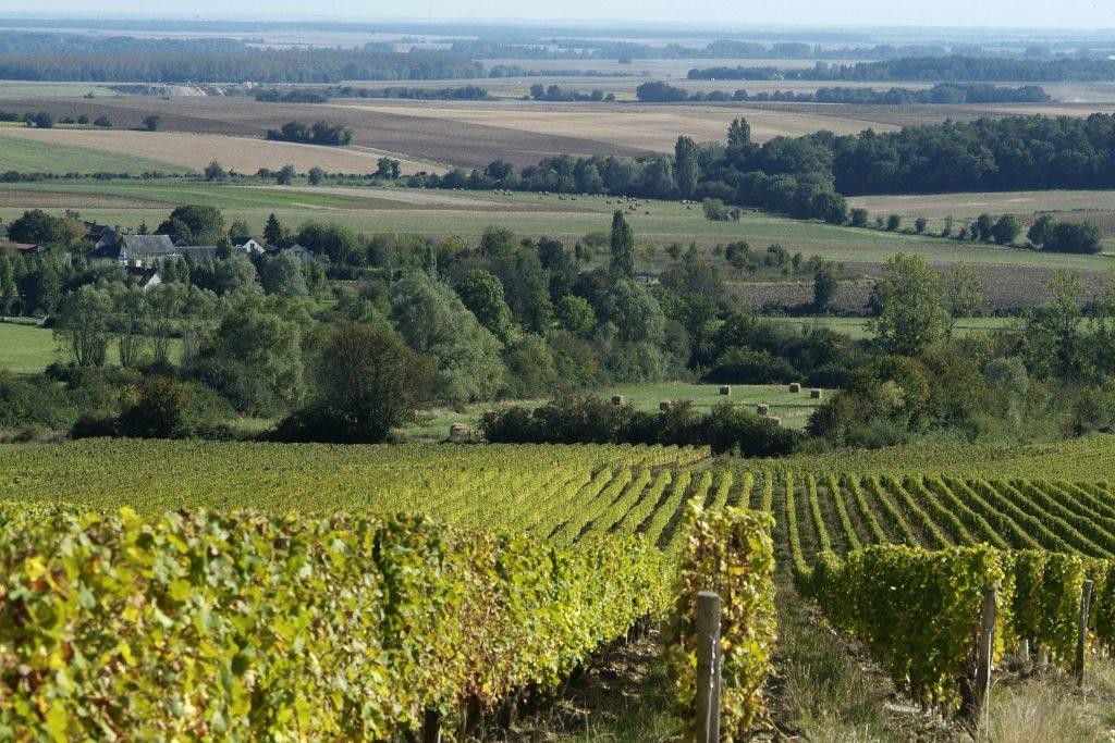 vignobles-menetou-salon-vins-centre-loire-BIVC-jkt2pttisnqrwy3jzpc1
