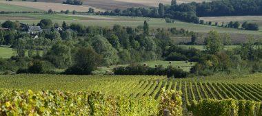 AOC Menetou-Salon, un vignoble aux arômes uniques