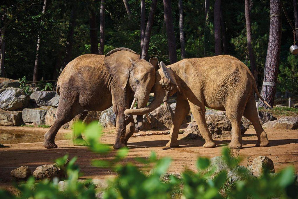 zoo de la fleche - elephant