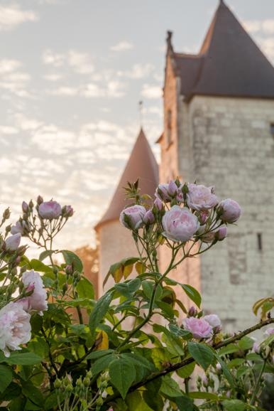 Chateau du Rivau, morning light in the rose garden