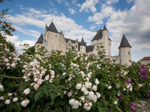 roses au chateau du rivau 2