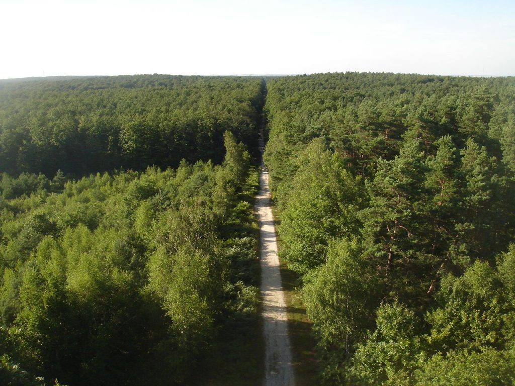 Forêt d'Orléans