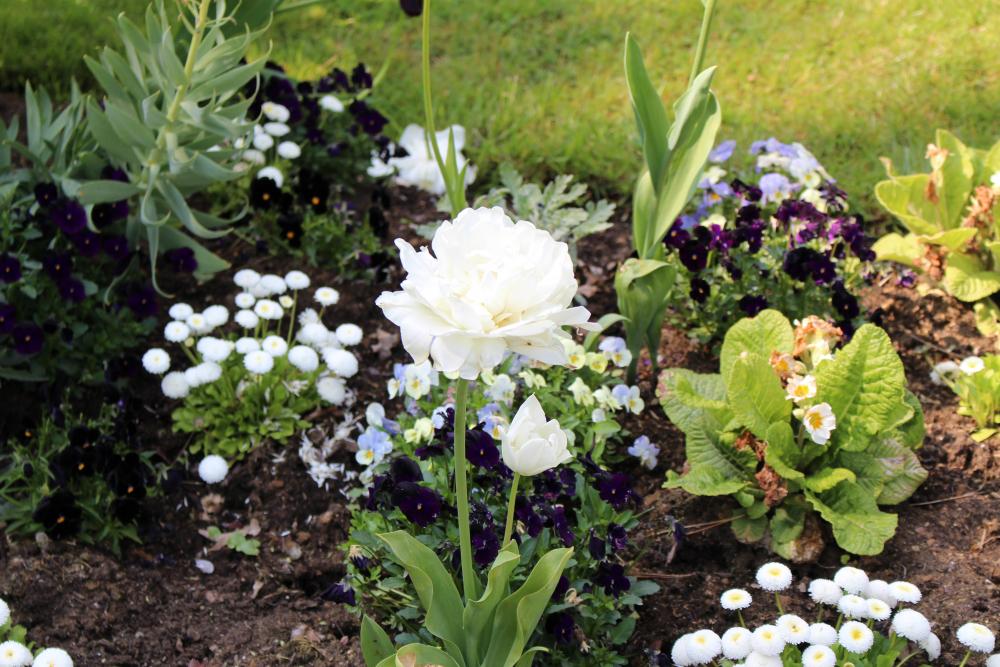 fleurs jardin catherine chenonceau©Boussole Voyageuse