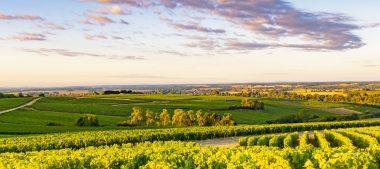 Les vignobles du Centre-Loire s'animent !