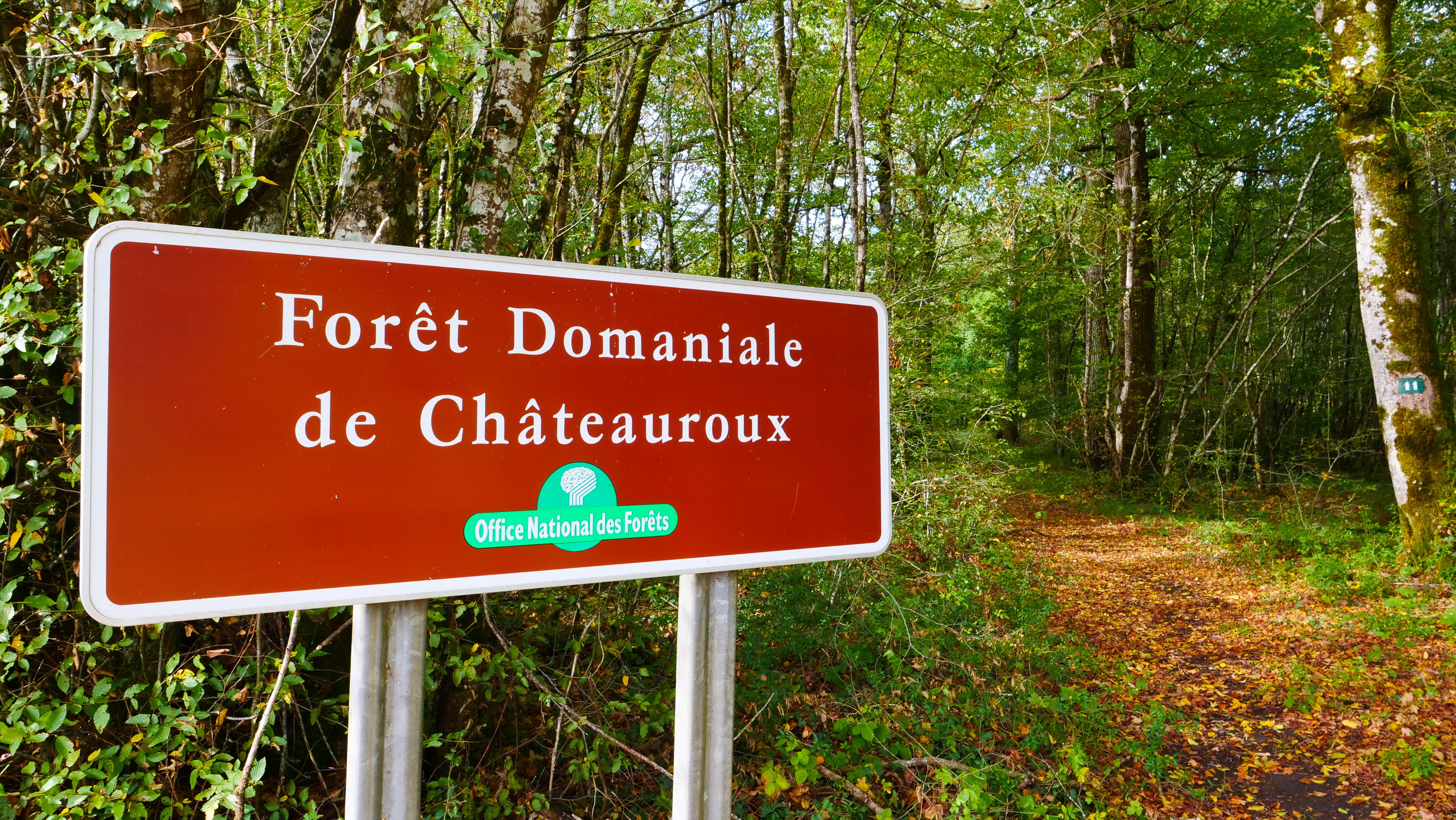 foret-domaniale-chateauroux-c-boussole-voyageuse (2)