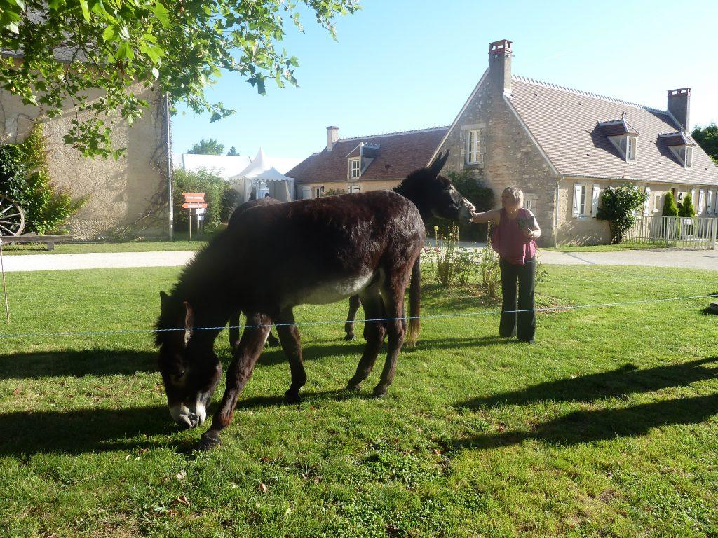 roulottes pole cheval et de l'ane - 1000 lieux du berry © Y Pirot