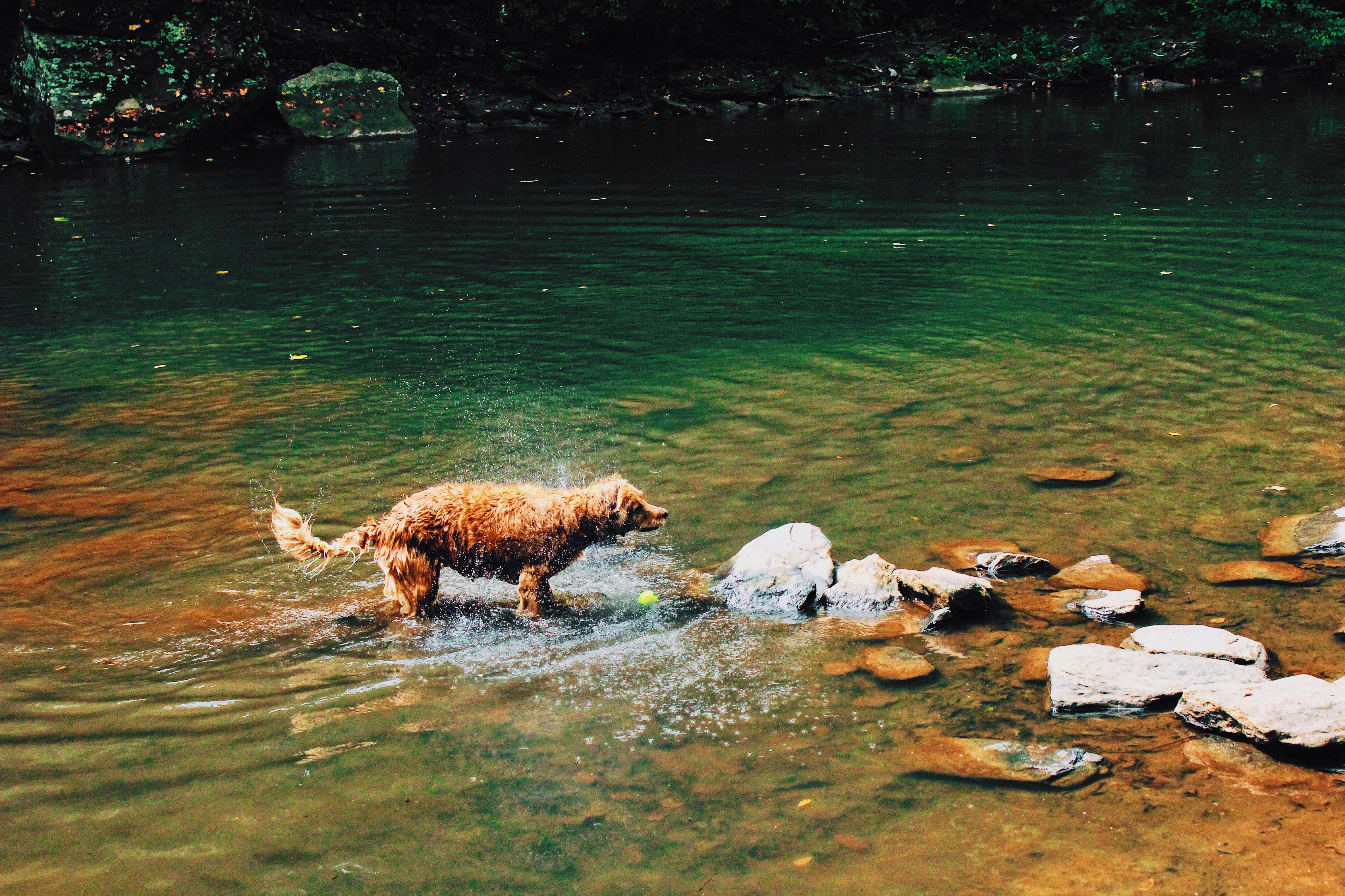 visiter le val de Loire avec son chien
