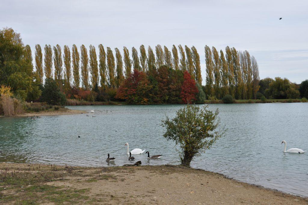 Lac de Châlette-sur-Loing - Sabliere (CC)