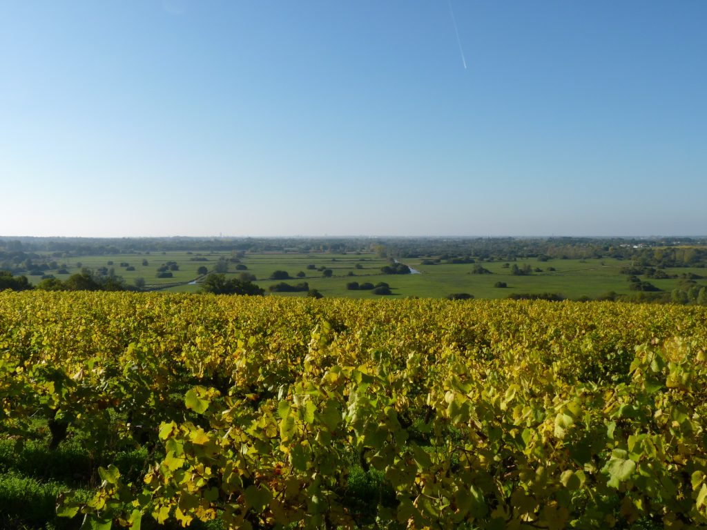 Vignobles Nantes