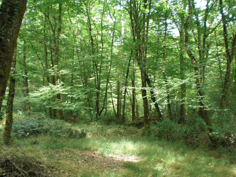 Forêt du Gâvre, Loire-Atlantique