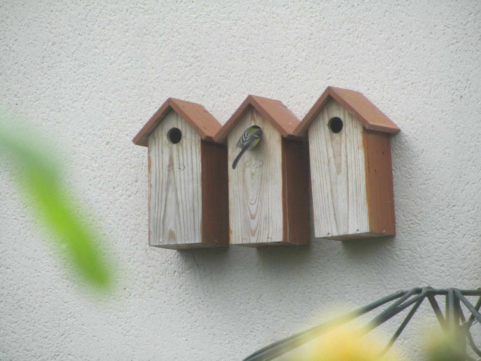 nichoir oiseau la roseraie de brigitte à cormeray (41)
