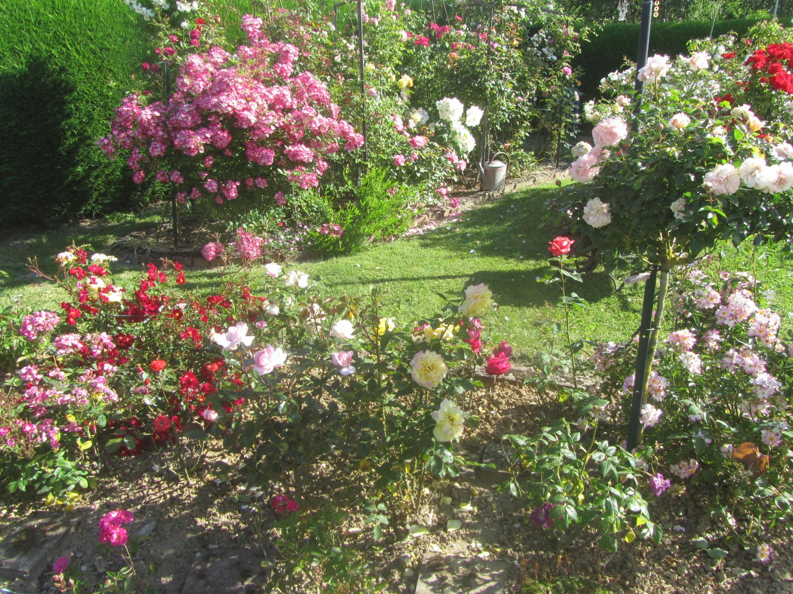 La roseraie de Brigitte à Cormeray dans le Loir-et-Cher (41)