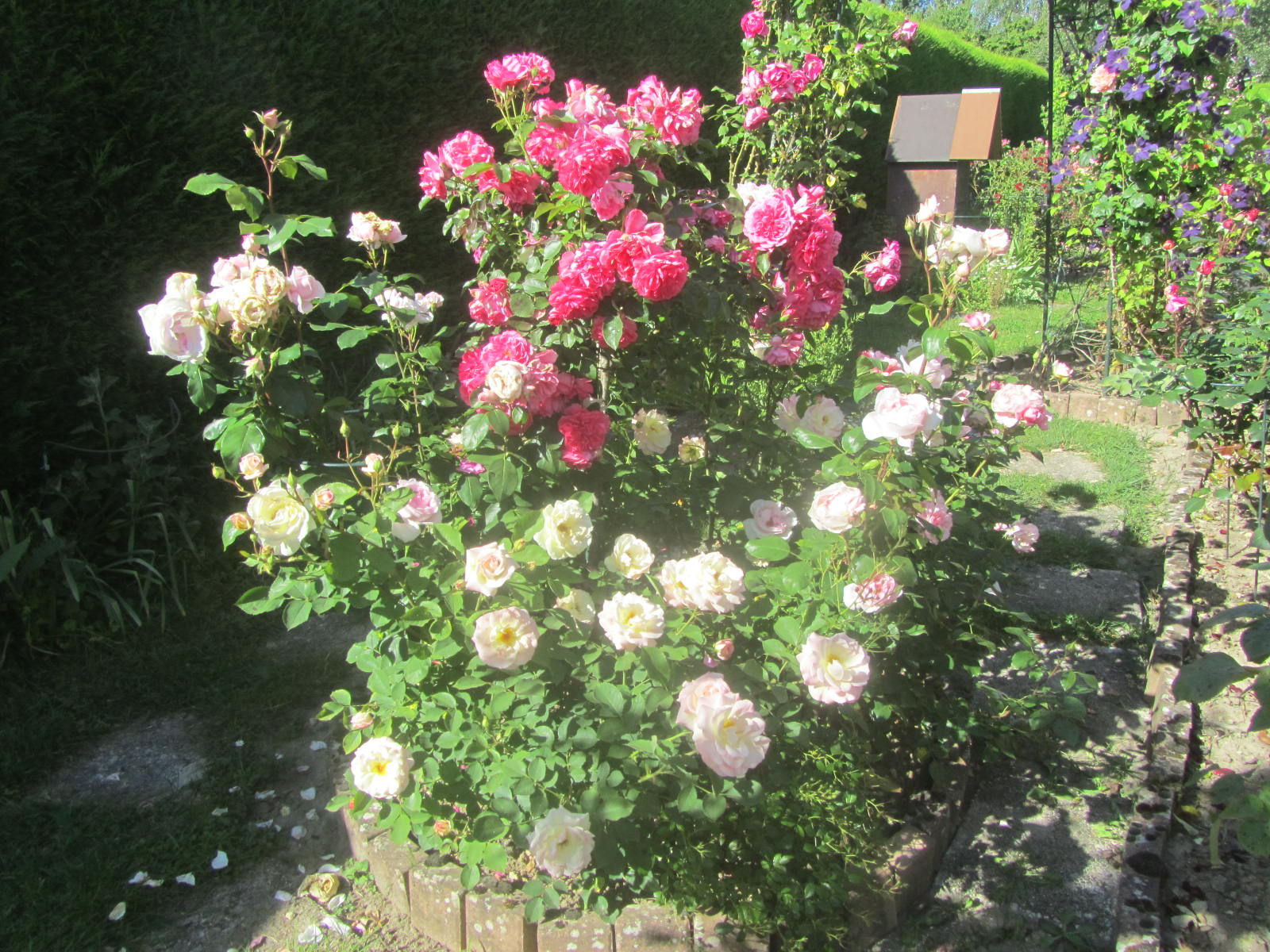 La roseraie de Brigitte à Cormeray Loir-et-Cher