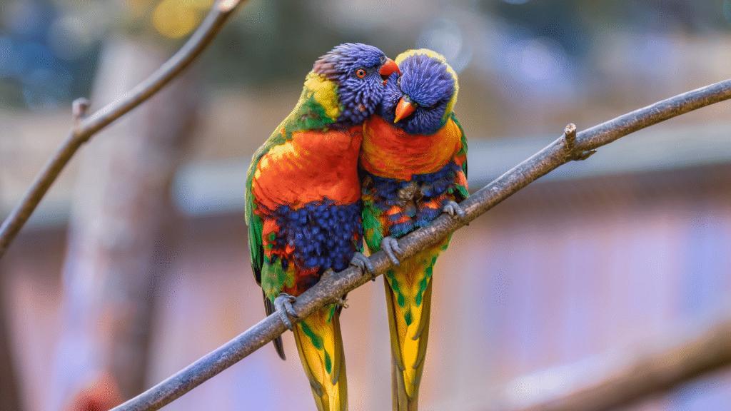 perroquets zoo
