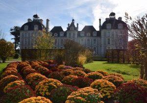 ChâteaudeCheverny@Chrysanthèmes-C.deVibraye
